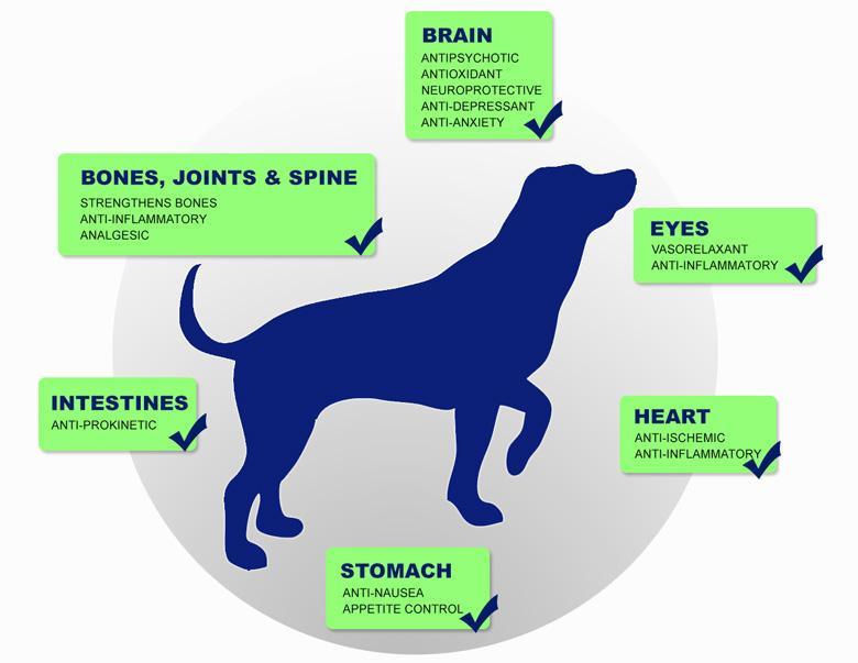cbd pets benefits